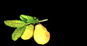 White Guava Cafe